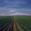 VIDEO / ARMENIA – 25 de ani de independență