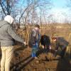 SUCEAVA /  Să plantăm un pom la mănăstirea Hagigadar…