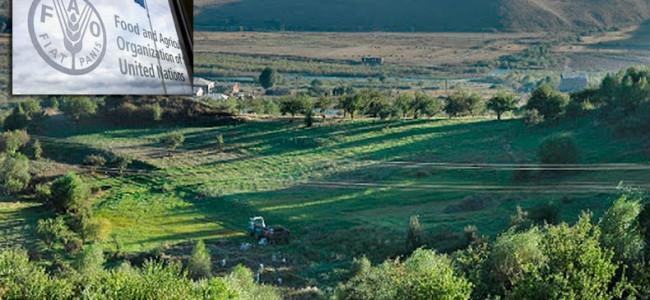 ARMENIA /FAO va acorda asistență de 350.000 de dolari persoanelor afectate de războiul din Karabakh