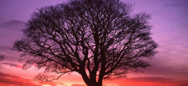 Arborele minunat