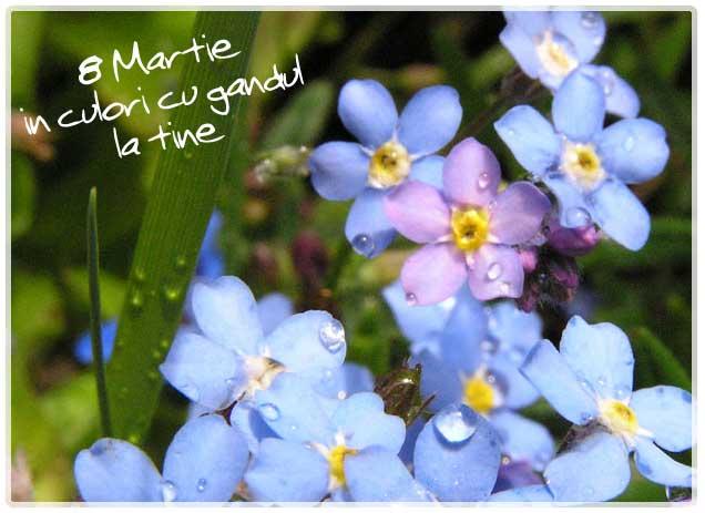 martie_8martie